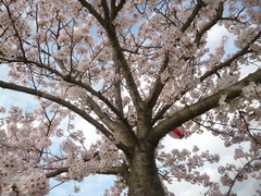 あたたかい春がやってきました!