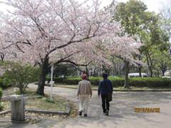 きれいな桜です。