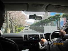 車の中からみる桜もきれいでした。
